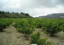 portfolio_viniculture